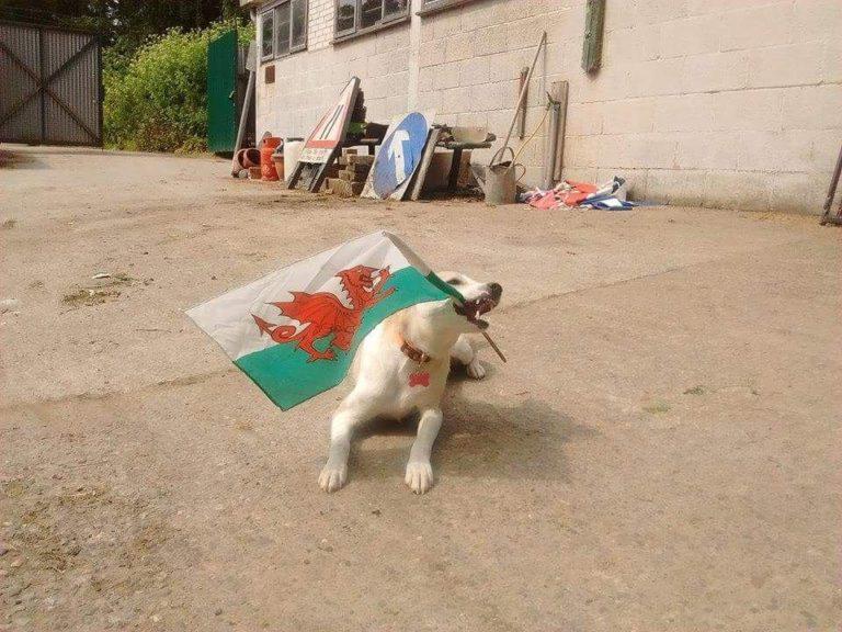 The Little Brown Dog Rescue Bailey Dog Blog #1 | Pero Trade